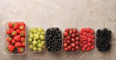 Antioxidant Supplementation