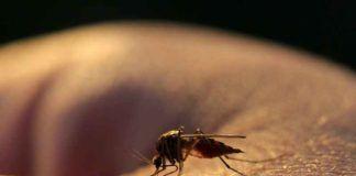 symptoms of Zika