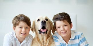 pet companionship