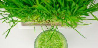 wheatgrass and menopause