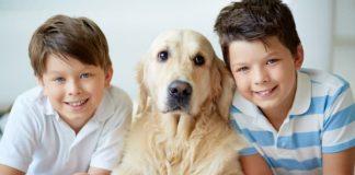 hypoallergenic dogs