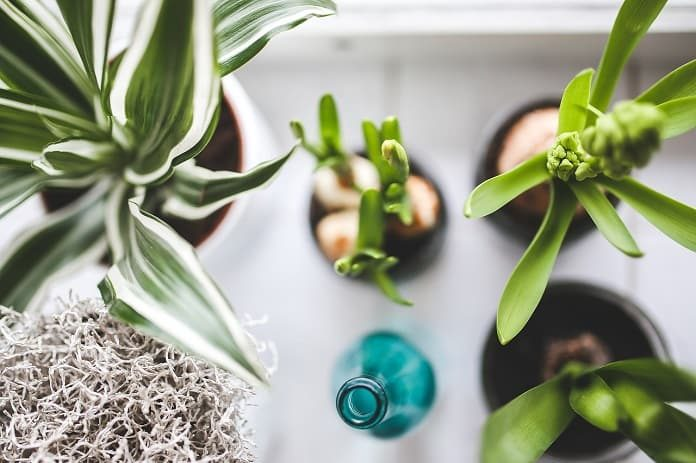houseplants that clean the air