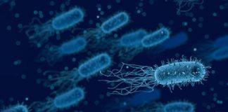 genetic risk of autoimmunity