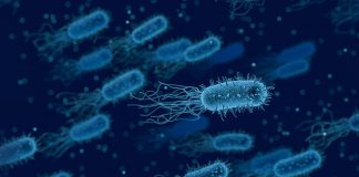 microbiome and cancer treatment