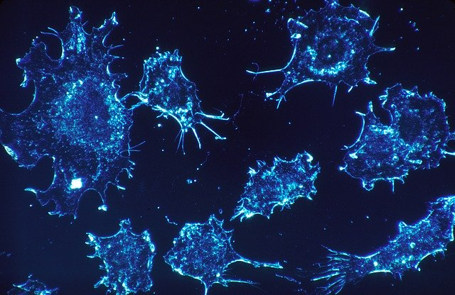 microbiome and endometrial cancer