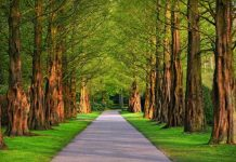 effects of green space