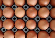balanced protein intake