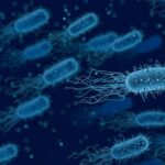 gut microbiome and parkinson's disease