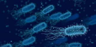gut microbiome and aging