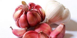 top 7 health benefits of garlic