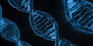 DNA, gene